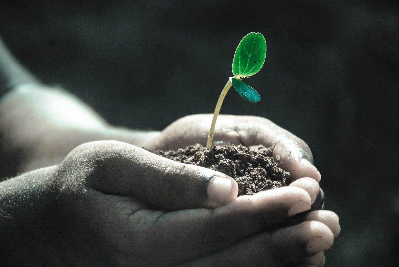 plants 1625473276
